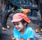 Mädchen mit einem bunten Papageien auf ihrem Kopf Lizenzfreies Stockbild