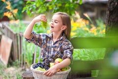 Mädchen mit einem Korb der Frucht im Garten Schönes kleines Landwirtmädchen, das organische Früchte hält Das Konzept von Ernte Ga stockbilder