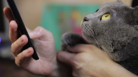 Mädchen mit einer Katze stock video