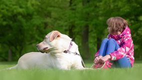 Mädchen mit labrador retriever-Hund stock video