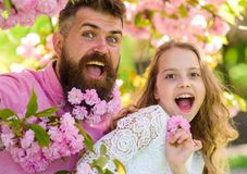 Mädchen mit Vati nahe Kirschblüte blüht am Frühlingstag Vater und Tochter auf glücklichen Gesichtern spielen mit Blumen und Umarm lizenzfreie stockfotografie