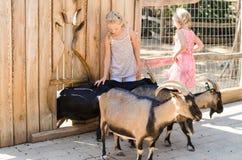 Mädchen mit Ziegen Stockfoto