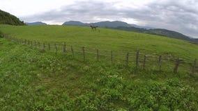 Mädchen reitet ein Pferd entlang alten Zäunen stock footage