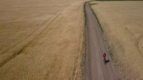 Mädchen reitet entlang die Straße zwischen landwirtschaftliche Felder stock video