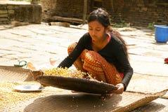Mädchen siebt Mais Stockfotografie