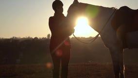 Mädchen steht in der Wiese und streicht das Pferd ein schöner Sonnenuntergang Langsame Bewegung stock video footage