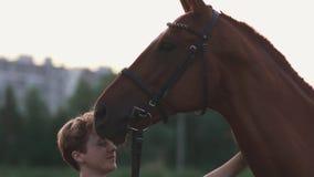 Mädchen streicht das Pferd stock footage