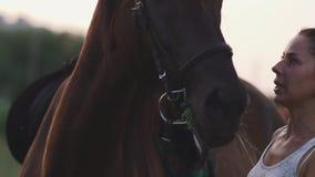 Mädchen streicht das Pferd stock video
