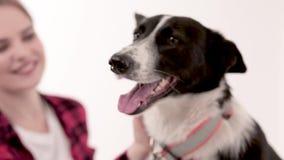 Mädchen streicht Hund stock video