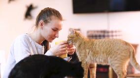 Mädchen in trinkendem Kaffee der warmen Strickjacke mit roter Katze auf ihrem Schoss im Katzencafé stock video footage