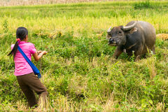 Mädchen-u. Wasser-Büffel stockfotografie