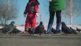 Mädchen-und Frauen-Würfe panieren Krumen zu den Tauben stock video