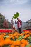 Mädchen und golden retriever in den Blumen Lizenzfreie Stockfotografie
