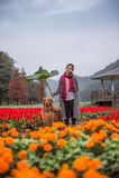 Mädchen und golden retriever in den Blumen Stockfotos