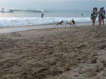 Mädchen und ihre Hunde auf Strand Lizenzfreies Stockfoto