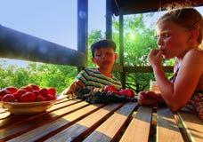 Mädchen und Junge mit Frucht im Garten Schönes kleines Landwirtmädchen und -junge, die organische Früchte, Trauben, Äpfel isst E lizenzfreie stockfotografie