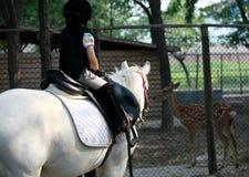 Mädchen und Pferd Stockfotos
