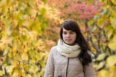 Mädchen vor dem hintergrund des Herbstlaubs Stockbild