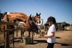 Mädchen, welches das Pferd in der Ranch einzieht lizenzfreies stockfoto