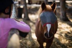 Mädchen, welches das Pferd in der Ranch einzieht stockfotos