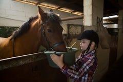 Mädchen, welches das Pferd im Stall einzieht lizenzfreie stockfotografie