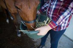 Mädchen, welches das Pferd im Stall einzieht stockbilder