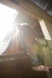 Mädchen, welches das Pferd im Stall einzieht stockbild
