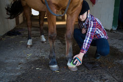 Mädchen, welches das Pferd pflegt lizenzfreie stockfotos