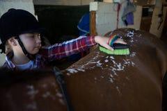 Mädchen, welches das Pferd pflegt stockbilder