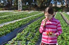 Mädchen, welches die Erdbeere auf Bauernhof isst stockfoto
