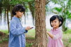 Mädchen wenig zwei, das den Baumstamm überprüft Stockbild