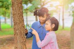 Mädchen wenig zwei, das den Baumstamm durch die Lupe überprüft Lizenzfreies Stockfoto