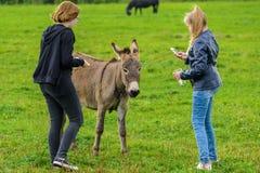 Mädchen ziehen den Esel auf einem grünen Rasen ein und fotografieren ihn Lizenzfreie Stockbilder