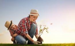 Mädchenbetriebsschößlingsbaum Stockfoto