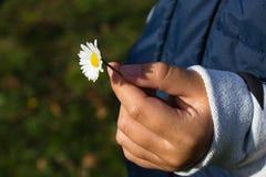 Mädchenhand, die ein Gänseblümchen hält Lizenzfreie Stockbilder