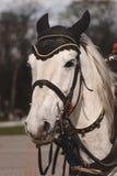 Mädchenhandstreichelndes Pferdedetail Lizenzfreies Stockfoto