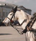 Mädchenhandstreichelndes Pferdedetail Stockfotografie