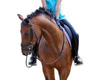 Mädchenjockey, der ein schönes braunes Pferd reitet Lizenzfreies Stockfoto