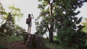 Mädchenreise mit einer Tasche auf Stumpfbaum, machen Foto vom Koniferenbaum am Telefon stock video footage