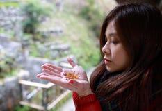 Mädchenreise, zum des Rotahorns mit dem Japan-Hintergrund zu sehen Lizenzfreie Stockfotos