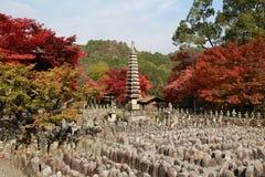Mädchenreise, zum des Rotahorns mit dem Japan-Hintergrund zu sehen Lizenzfreies Stockbild