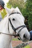 Mädchenreiter auf einem Pferd Stockfoto