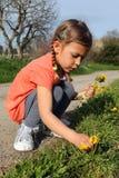 Mädchensammeln-Gänseblümchenblumen Lizenzfreie Stockbilder
