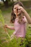 Mädchensammelnkarotten im Gemüsegarten Stockbilder