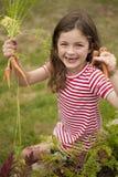 Mädchensammelnkarotten im Gemüsegarten Stockfotografie