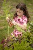 Mädchensammelnkarotten im Gemüsegarten Stockfotos
