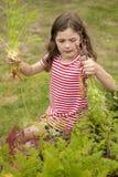 Mädchensammelnkarotten im Gemüsegarten lizenzfreie stockbilder
