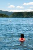 Mädchenschwimmen mit Schwänen stockfoto