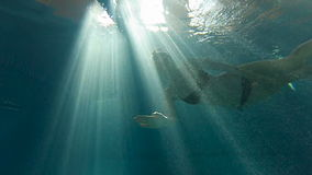 Mädchenschwimmen unter Wasser gegen das Licht im Pool stock video