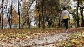 Mädchenweg ungefähr mit Spürhundwelpen im herbstlichen Park stock footage
